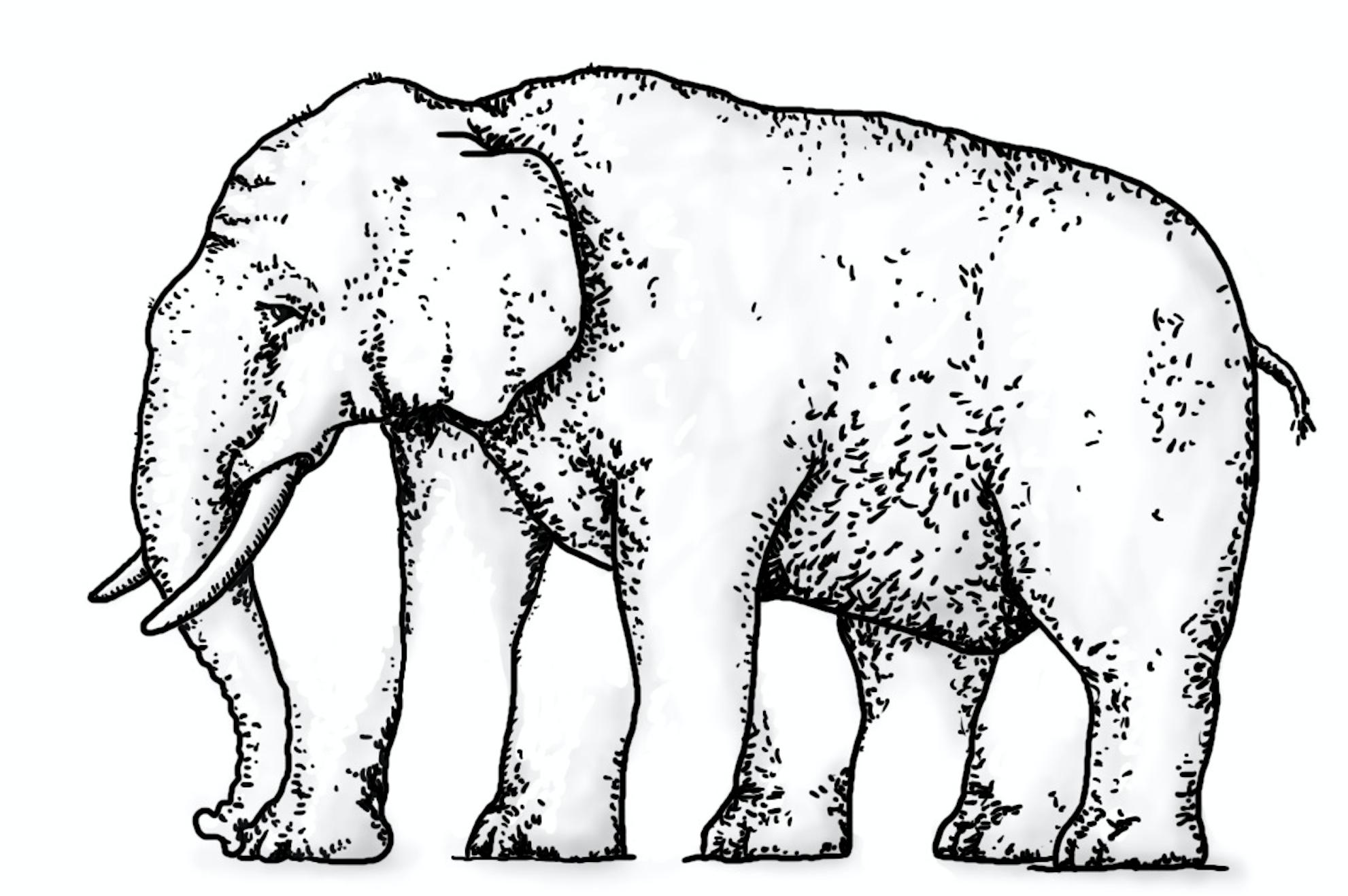 dotag_blog_content_imagination_elefant