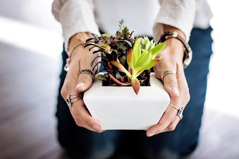 dotag_Blog_Inhalt_succulents